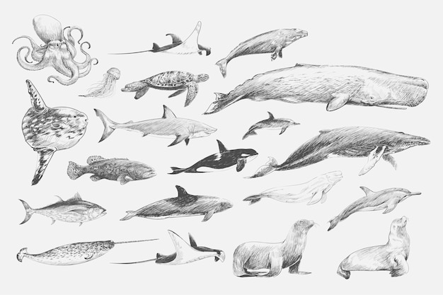 Estilo de dibujo ilustración de la colección de vida marina
