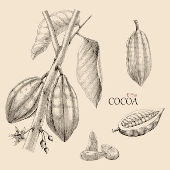 Estilo de grabado de dibujo a mano de árbol de cacao