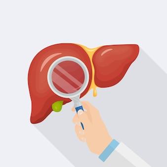 Estudio de la ilustración del hígado de órganos internos