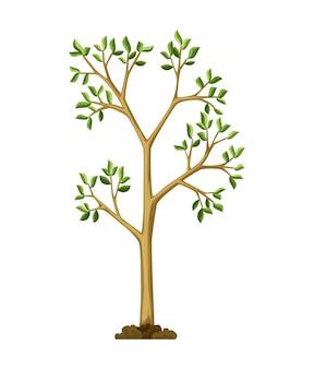 Etapa de crecimiento del árbol. gran crecimiento de árboles con hojas y ramas verdes. ilustración de la planta de la naturaleza.