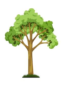Una de las etapas del crecimiento del árbol. crecimiento de árboles grandes con hojas y ramas verdes, planta natural.