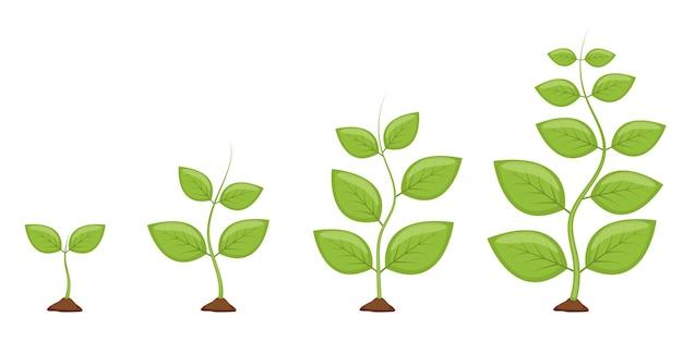 Etapas de crecimiento de la planta