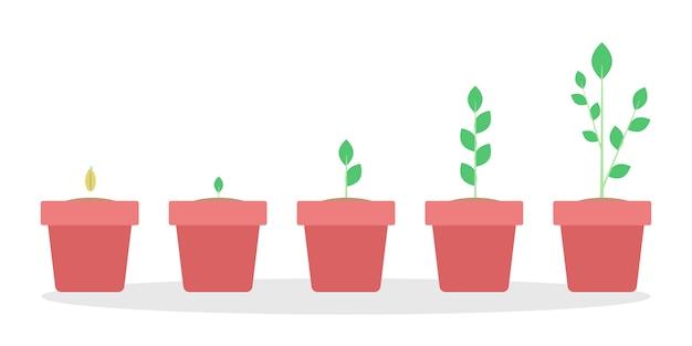 Etapas de crecimiento de las plantas verdes en el bote rojo. de semilla a gran brote. ilustración