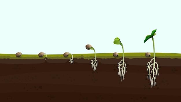 Etapas de la germinación de la semilla de cannabis desde la semilla hasta el brote, ilustración realista. proceso de siembra de marihuana.