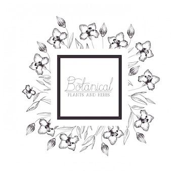 Etiqueta botánica con plantas y hierbas.