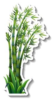 Etiqueta engomada del árbol de bambú en blanco