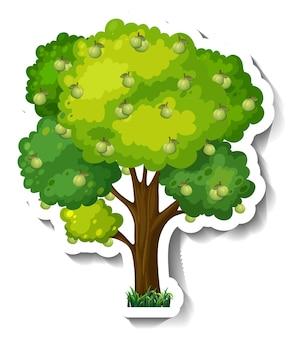 Etiqueta engomada del árbol de guayaba sobre fondo blanco