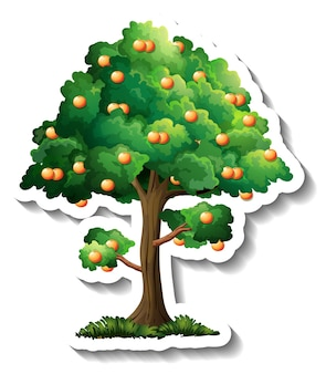 Etiqueta engomada del árbol de naranja sobre fondo blanco