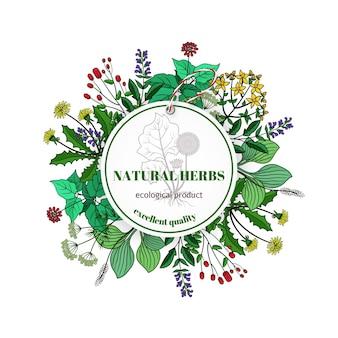Etiqueta de hierbas y hojas dibujadas a mano. albahaca y tomillo, romero y menta.