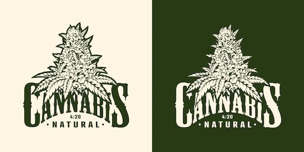 Etiqueta de planta de marihuana vintage