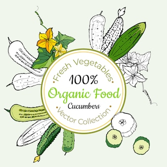 Etiqueta vintage pepinos vegetales comestibles