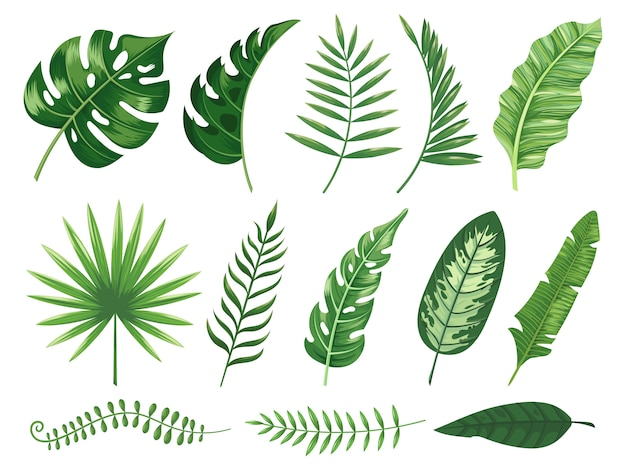 Exóticas hojas tropicales. monstera planta hoja, plantas de plátano y trópico verde hojas de palma conjunto aislado