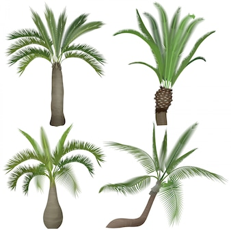 Exótico conjunto de colección de árboles de palmeras realistas tropicales.
