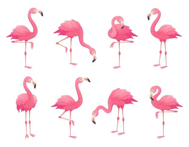 Exóticos pájaros flamencos rosados.