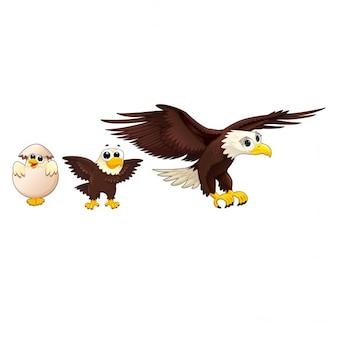 Familia de águilas