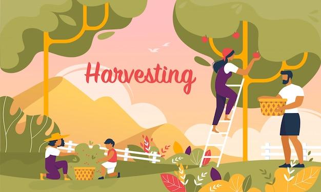 Familia feliz cosechando en la pancarta de jardín, verano
