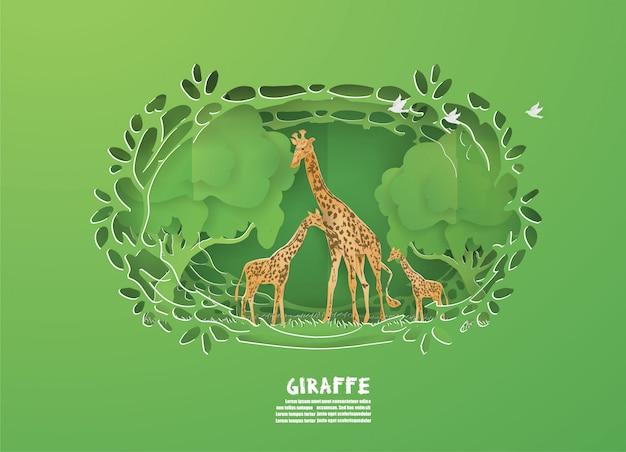 Familia de giraffes en el bosque verde en naturaleza, animales, fauna.
