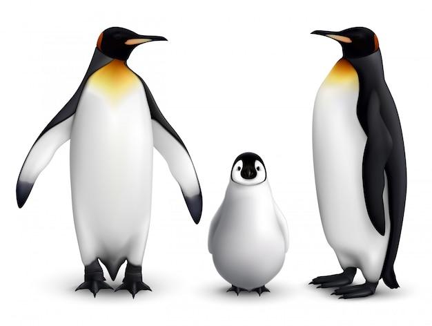 Familia de pingüinos rey con imagen de primer plano realista de pollito con vista frontal y lateral de aves adultas