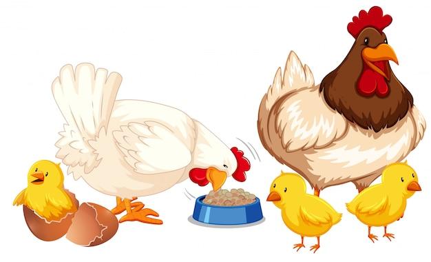 Una familia de pollos feliz