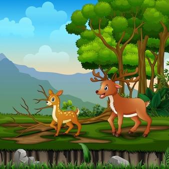 Familia de renos salvajes en el paisaje forestal