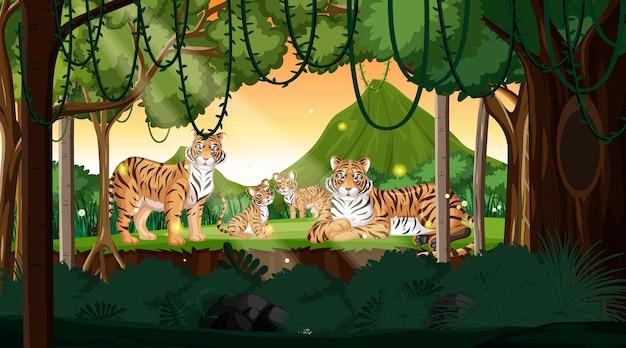 Familia de tigre en el fondo del paisaje forestal