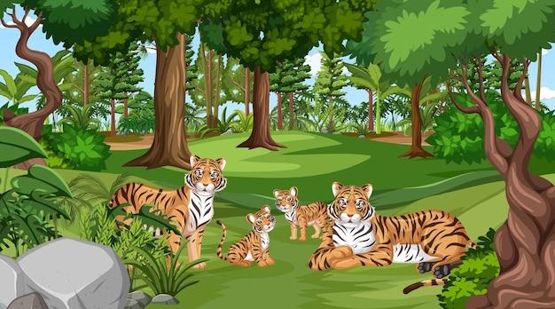Familia de tigres en la escena del bosque con muchos árboles.