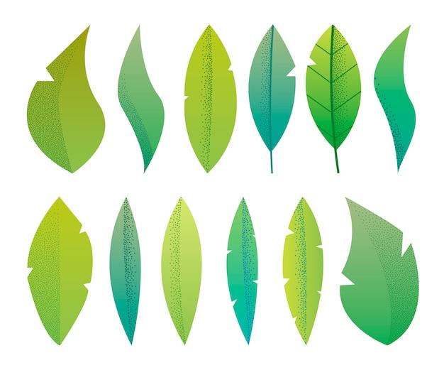 Fantasía plana moderna deja herbario, plantas, árboles conjunto minimalista, diseño texturizado sobre fondo blanco.