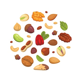 Fije los iconos tuercas en dibujos animados. recogida de frutos secos. maní, avellana, pistacho, anacardo, nuez, nuez, nuez de brasil, almendra y bellota.