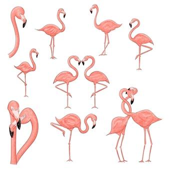 Flamingo dibujos animados set ilustración aislado en blanco