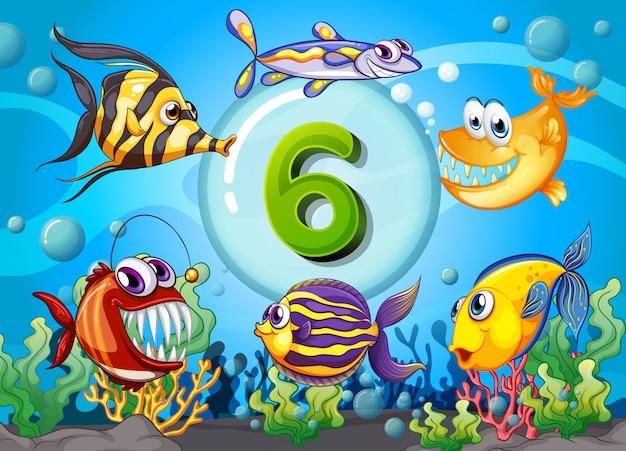 Flashcard número seis con 6 peces bajo el agua.