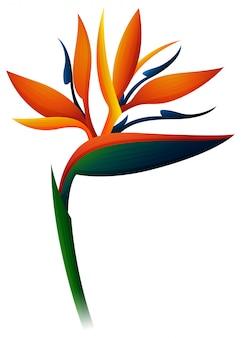 Flor de ave del paraíso en el fondo blanco
