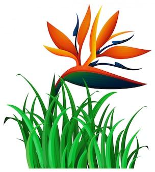 Flor de ave del paraíso en el monte