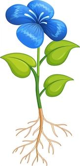 Flor azul con hojas verdes y raíces sobre fondo blanco.