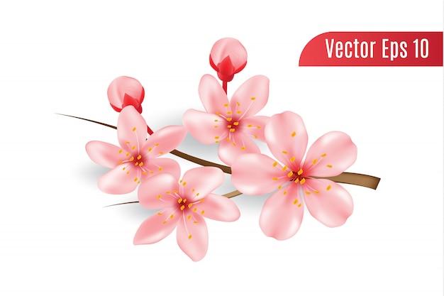 Flor de cerezo 3d realista aislada, flor de sakura con rama