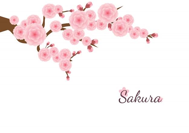 Flor de cerezo florece el fondo. sakura flores de color rosa.