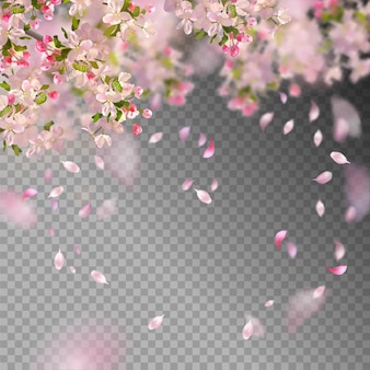 Flor de cerezo y pétalos voladores sobre fondo de primavera