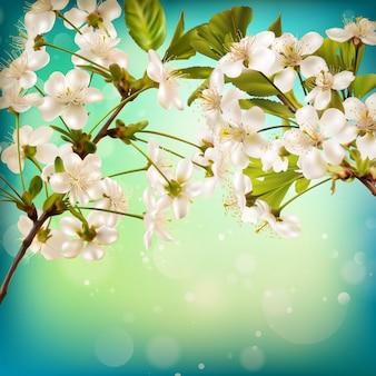 Flor de cerezo sobre fondo azul.