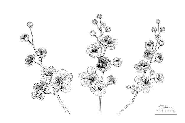 Dibujo De Flor De Cerezo Para Colorear: Fotos Y Vectores Gratis