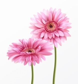 Flor de gerbera y letras de primavera.