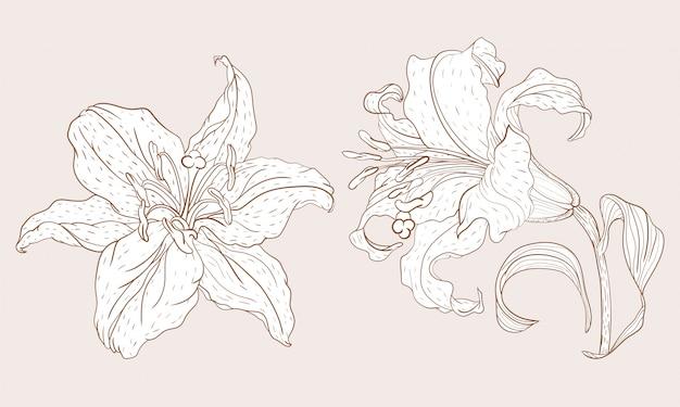 Flor de lirio asiático y flor de vapor
