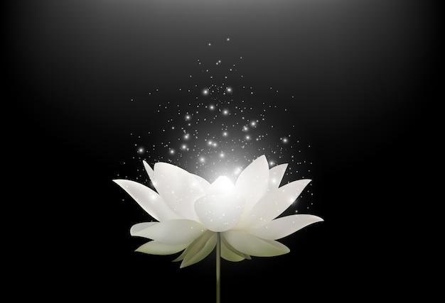 Flor mágica de loto blanco sobre fondo negro