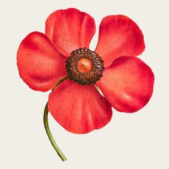 Flor de ojo de faisán