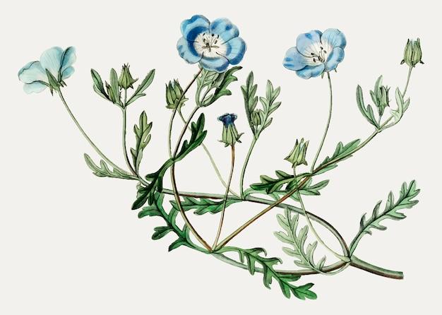 Flor de ojos azul celeste
