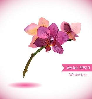 Flor de orquídea acuarela