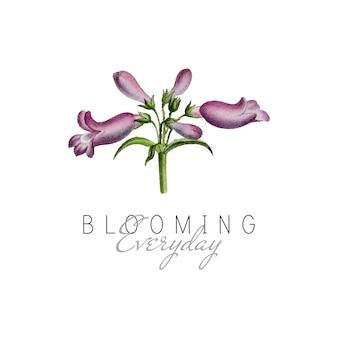 Flor de penstemon de hoja ancha