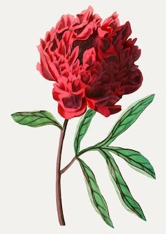 Flor de peonía china de pott vintage para decoración