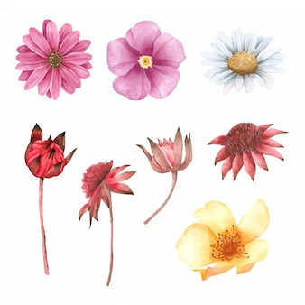 Flor pintada a mano en coleccion acuarela.