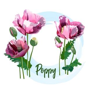 Flor de primavera - una amapola