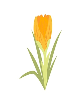 Flor de primavera. diseño de icono floral botánico. planta de jardín sobre fondo blanco.