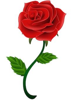 Flor roja flor rosa aislado un fondo blanco